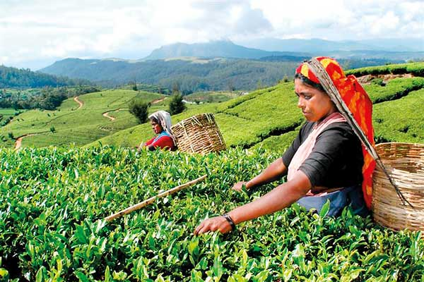 Still no deal on Rs. 1000 daily wage for plantation workers